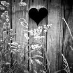 coeur de bois