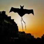 Bat volant