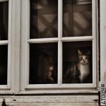 Wermer's cat