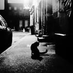 La nuit, ton chat.