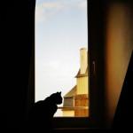 Le chat du toit