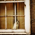 Le chat de Londres