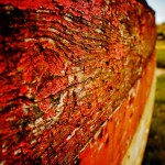 écailles rouges